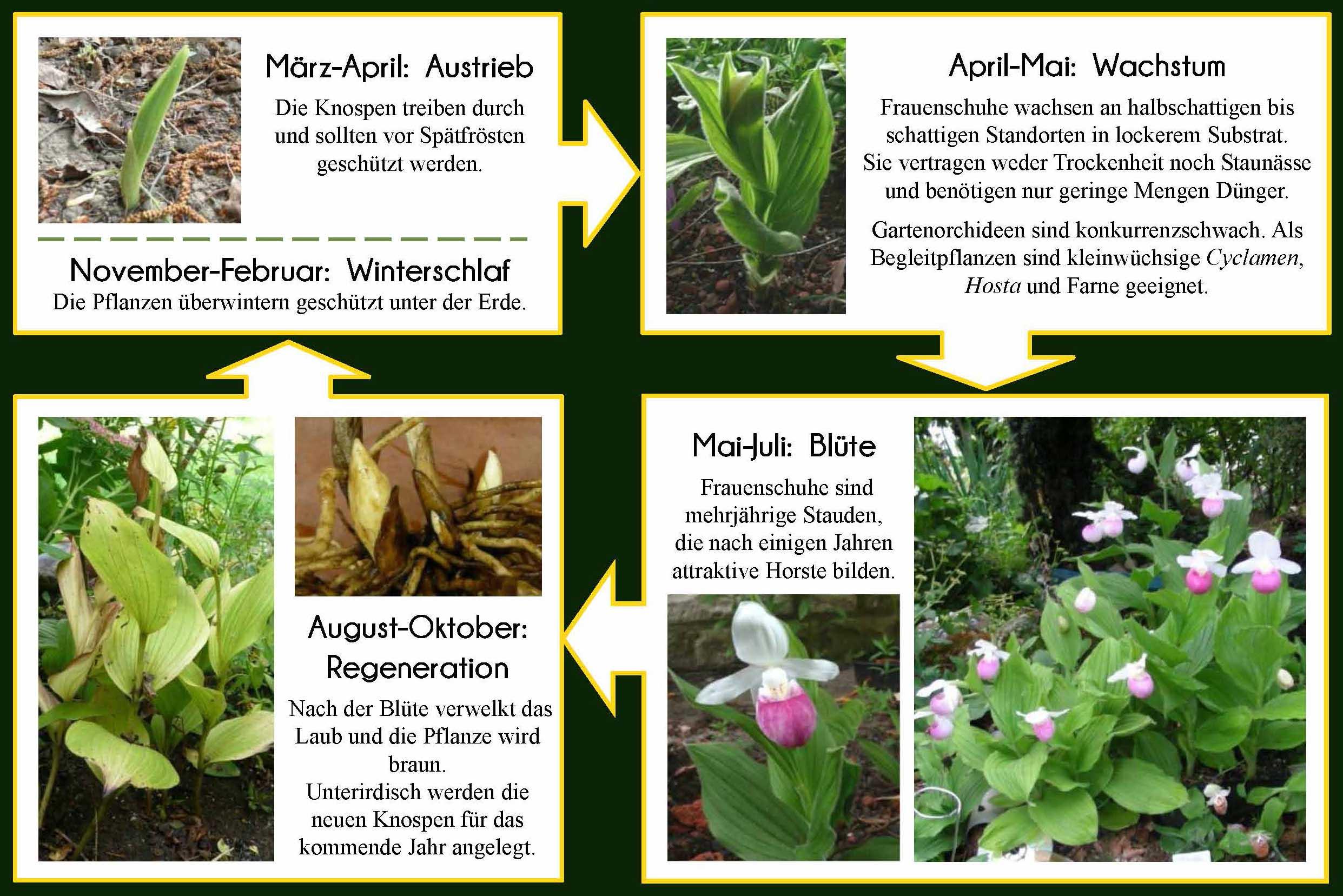 Pflanzung Und Pflege Goldgarten